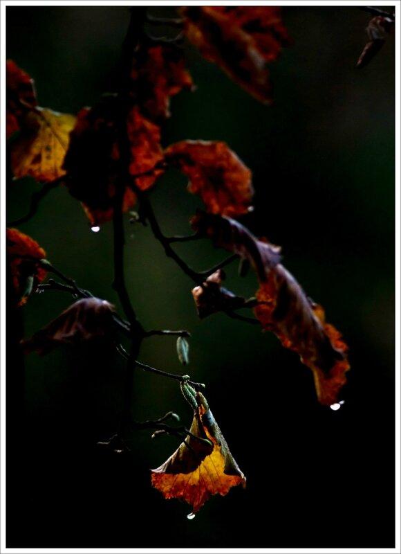 feuilles automne gouttes 261116