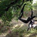 Curieuses sculptures suspendues à l'arbre