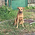 Jeune chienne abandonnée sur Ste Anne 1