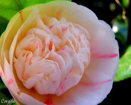 BlogJardin090423_jardinCamelia_1
