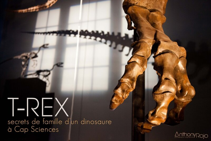 cap_sciences_t-rex_©_Anthony_Rojo