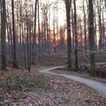 La forêt de soigne 2( à suivre )