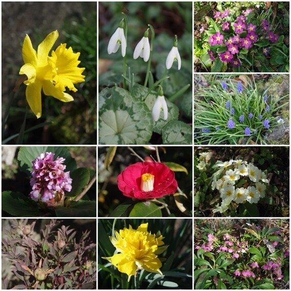 fleurs maman