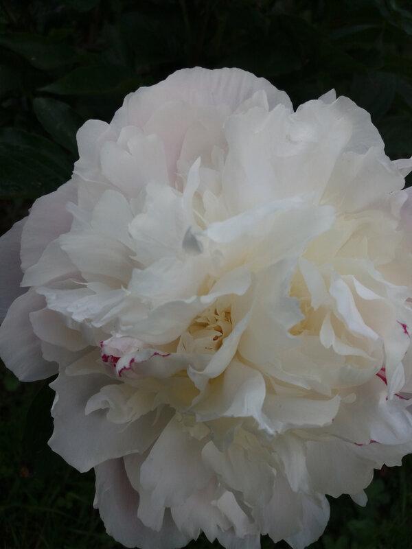 Balades fête des mères brocante jardin (40)