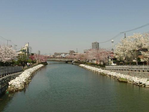 Hanami2012-Shinkawa-2