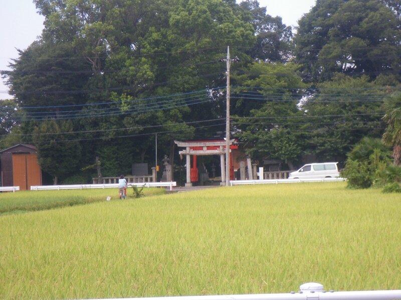 Omiya rizière et sanctuaire