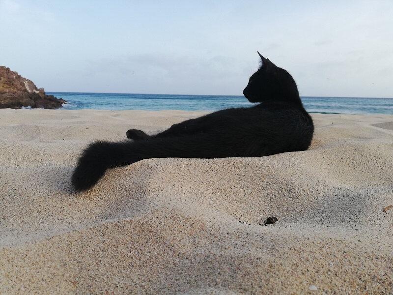 20190619 chat noir sur la plage de Gouverneur