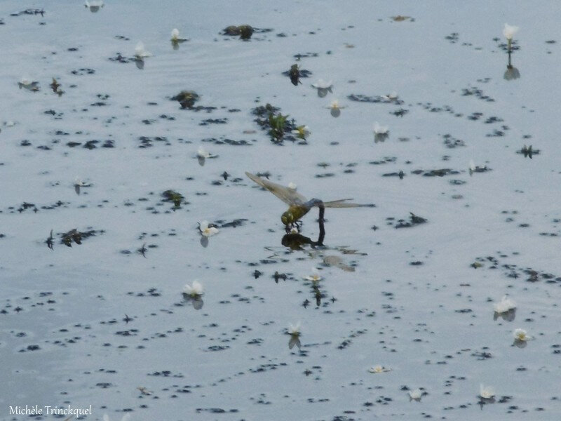 Balade au Lac 160618