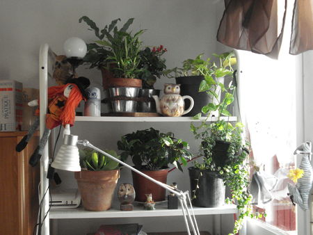 plantes_