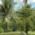 jardin botanique 106