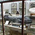 vitrine du coelacanthe