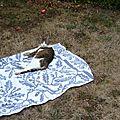 Bain de soleil de chat mérois