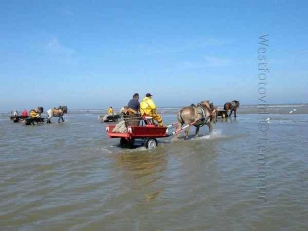 Paardenvissers562versl'eau0000