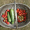 fraises, courgettes, tomates