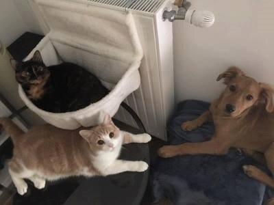 Boo et les chats