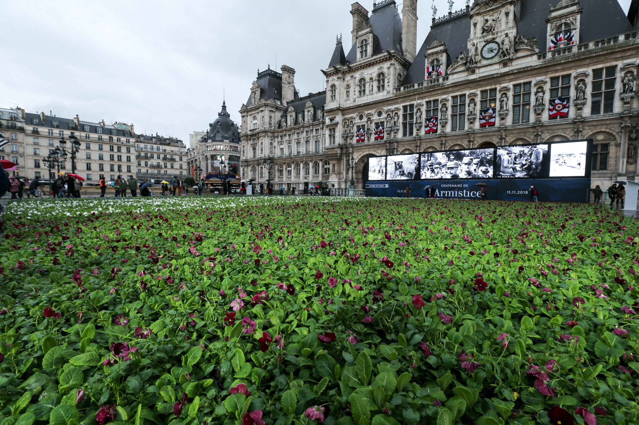 11-Novembre : 94.415 fleurs sur le parvis de la mairie de Paris. © Michel Stoupak. Sam 10.11.2018.