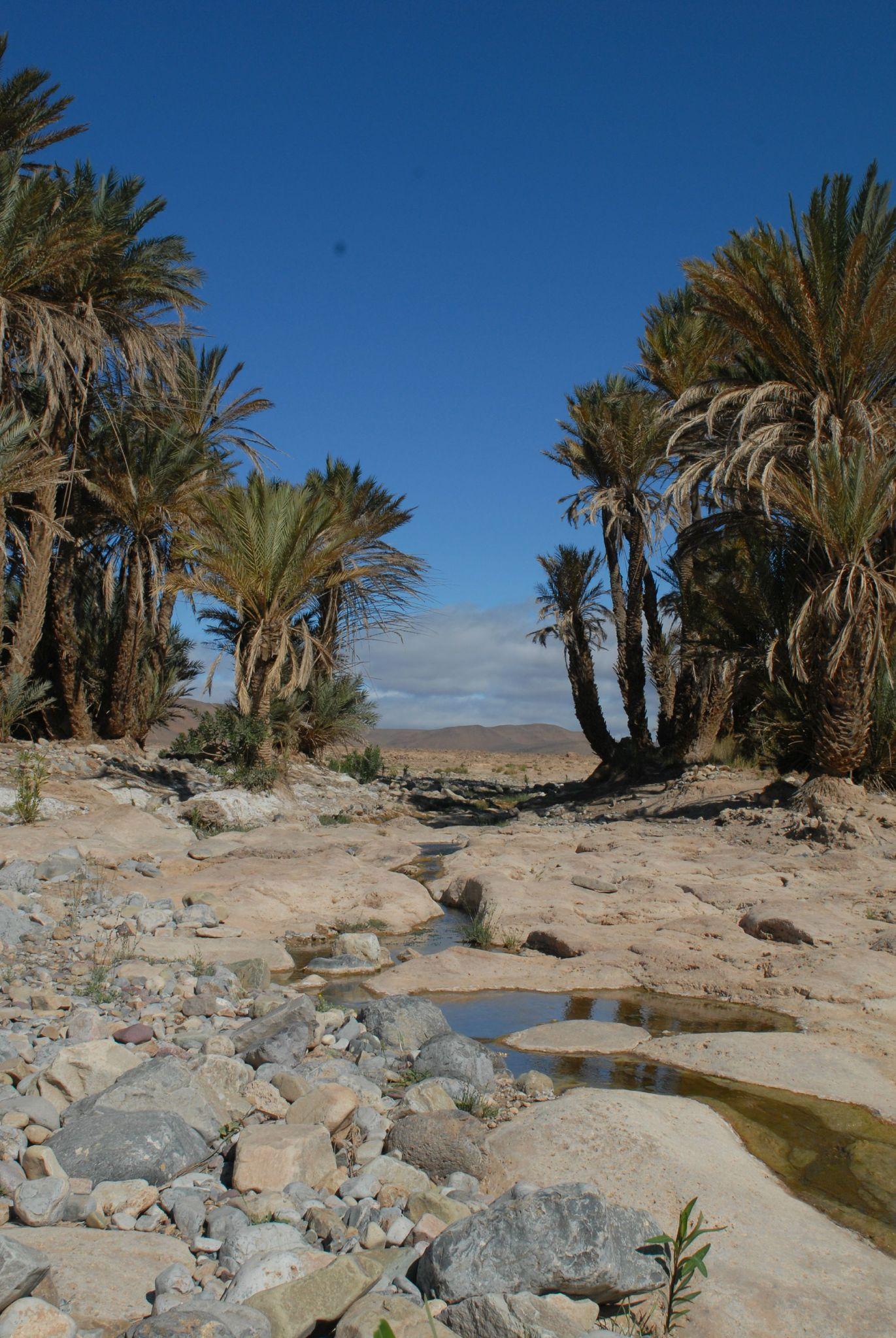 maroc 2011 (145)