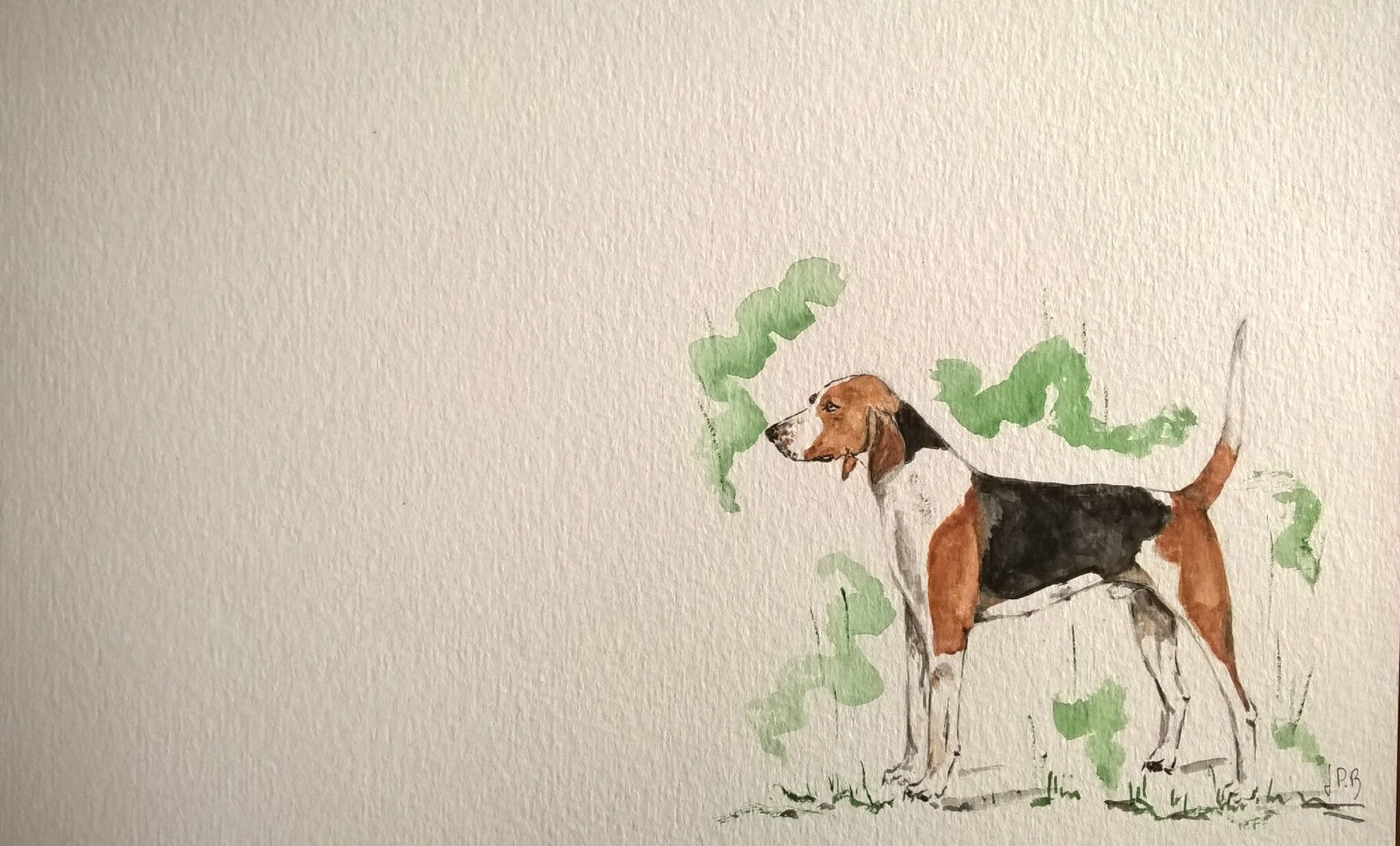 american foxhound texte