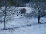 Neige à La Brutine