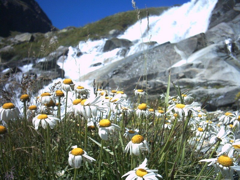 petite fleur bruler par le soleil d'été.