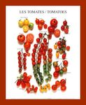 ARM124_Tomates_Affiches_1_