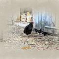 Maman poule et fontaine barcaccia de rome
