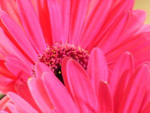 noel_fleur