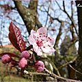 ♥ bon printemps à tous ♥