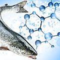 Du saumon ogm bientôt dans notre assiette ? il n'y a pas lieu de s'en réjouir