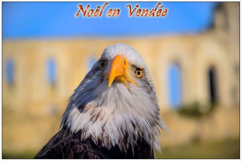 Noël en Vendée spectacles de rapaces abbaye de Maillezais