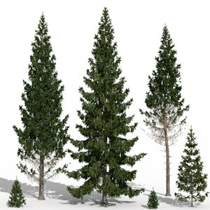 01 Picea abies Norway spruce fir tree 3d plant model factory 3ds cad max fbx obj icon1
