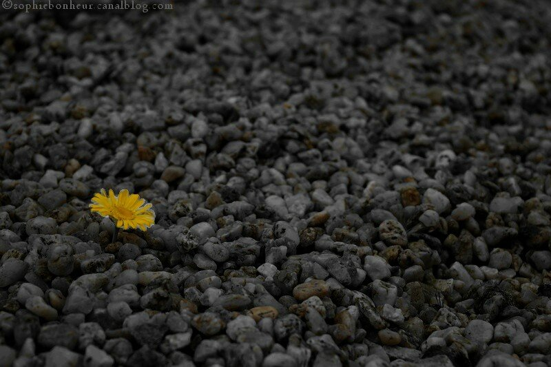 fleur espoir