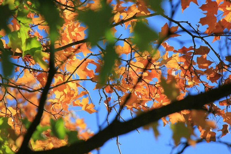 autumn-leaves-984933_960_720