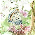 gi-papillonb
