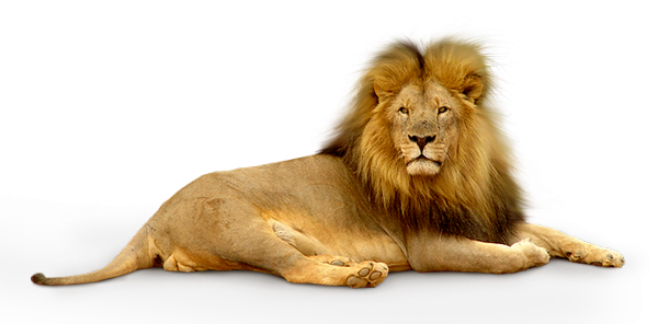 lion_png_by_anc4des_by_anc4des-d392gze