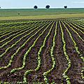 L'importation de soja pese tres lourd dans l'impact de la france sur la deforestation