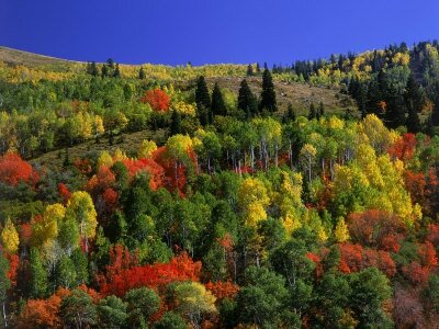 richard-stockton-trees-with-fall-foliage