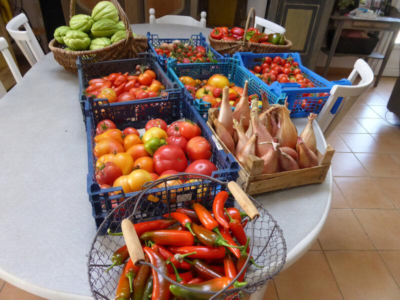 1-chayottes, tomates, poivrons, piments, échalions (2)