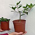 Troc aux plantes des jardins partagés de saâcy