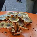 Sortie champignons du 30 septembre 2018