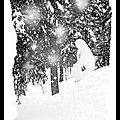 Féérie des neiges (noir & blanc)