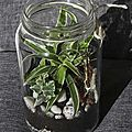 Mini jardin en bocal : terrarium diy