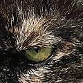 L'oeil de Pelute (64)