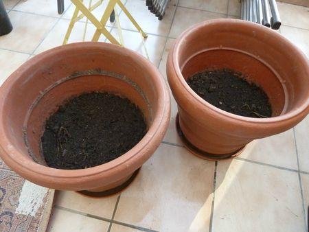 4-pommes de terre mira (2)