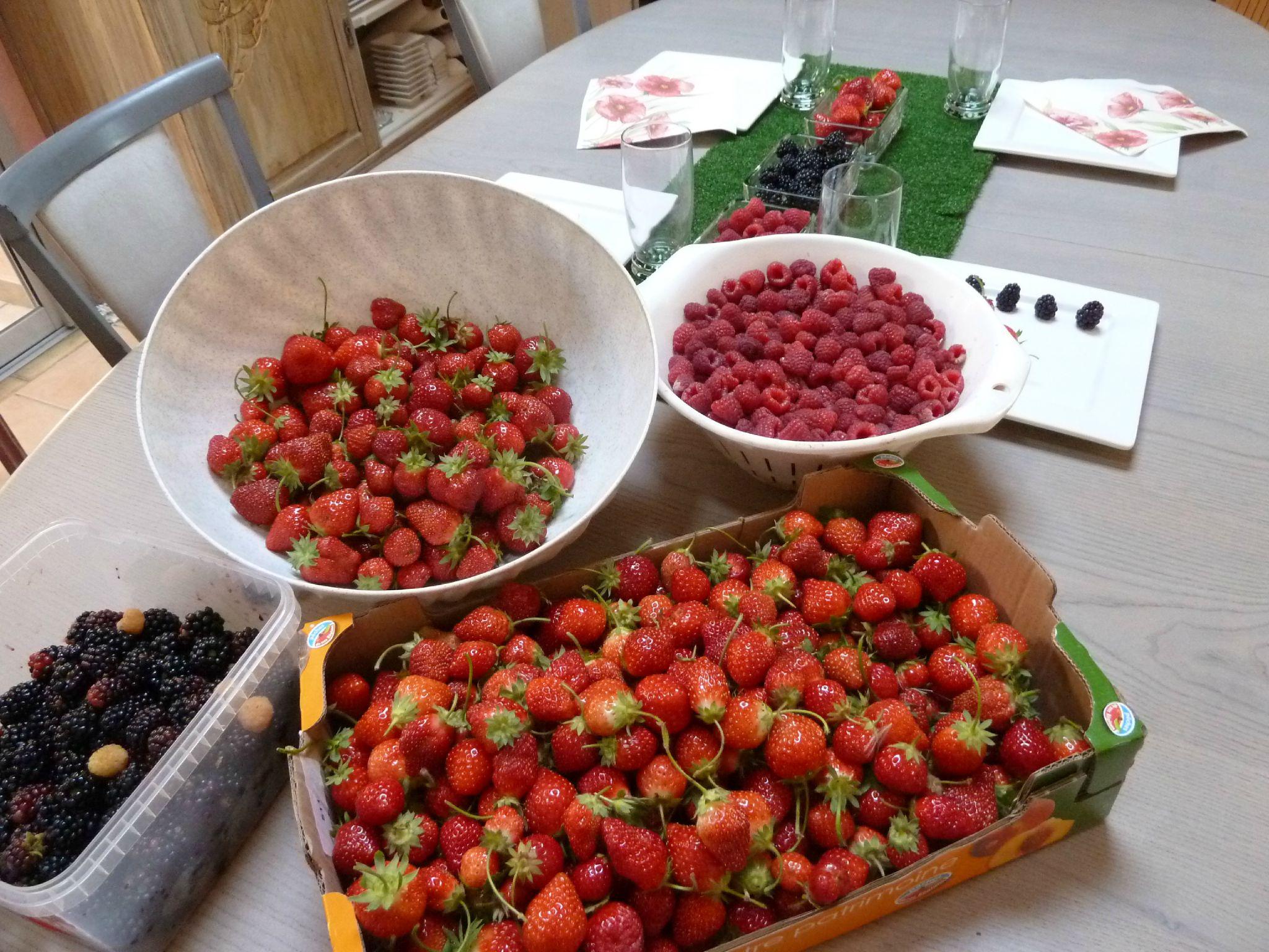 fruits de mon potager www.passionpotager.canalblog.com