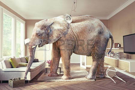 56812219_big_elephant_and_the_case_of_beer_in_the_living_room_3d_concept