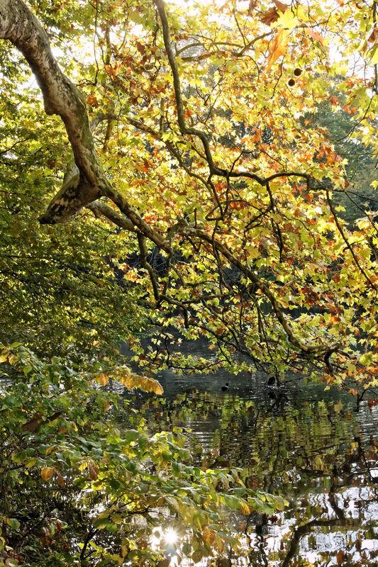 Bois_de_Boulogne_automne__25_