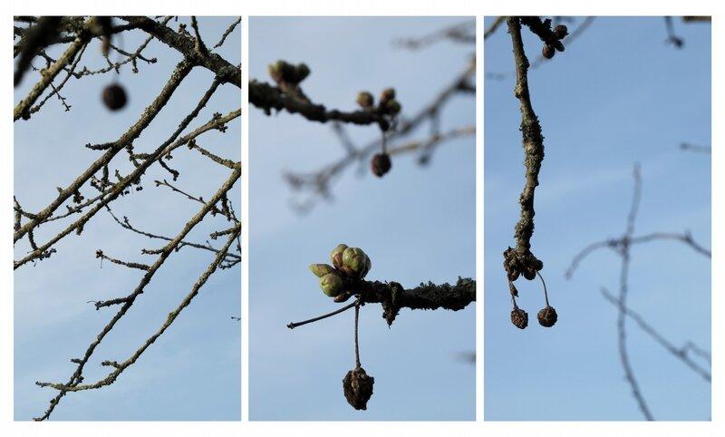 15-03-29, La fleur sans (8)