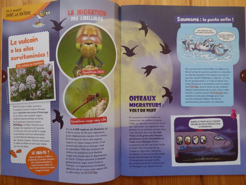 Oiseau Mag Jr 32 (2)