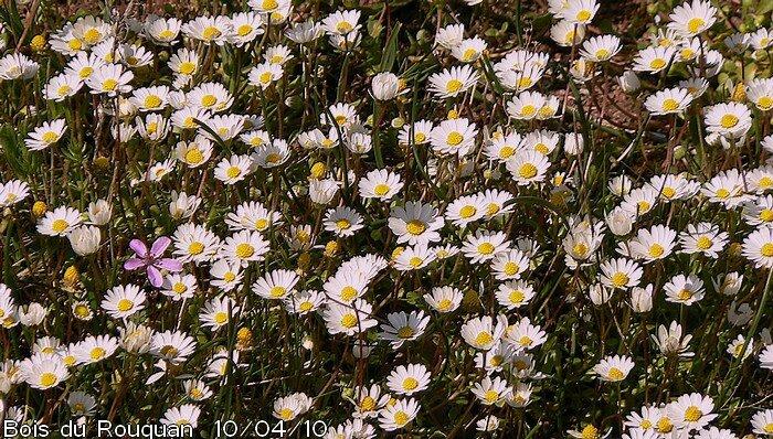floraison de Février à Juin